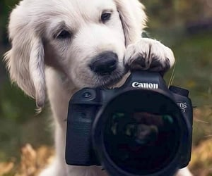 animals, dogs, and lovely image