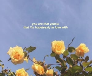 aesthetic, quote, and rose image