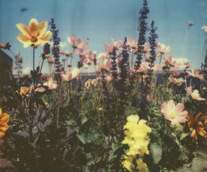 flowers, aesthetic, and retro image