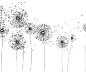 30 images about blow ball on we heart it see more about dandelion