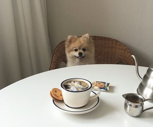 dog, food, and aesthetic image