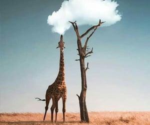 giraffe, nature, and animal image