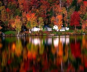 colorful, fall, and foliage image