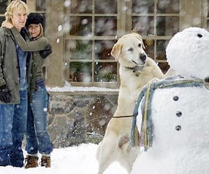 marley and me, movie, and dog image