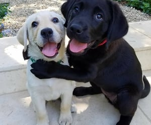 dog, puppies, and doggies image