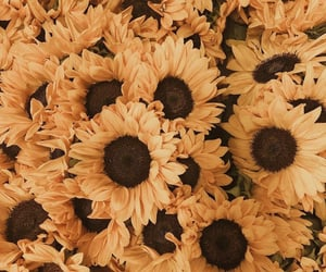 flowers and sunflower image