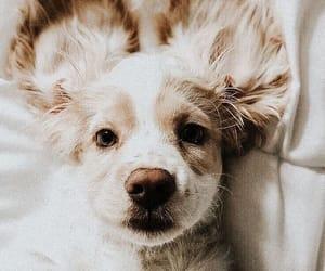 animal, bed, and dog image
