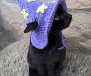 animal, cat, and hat image