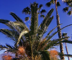 blue sky, holiday, and palm trees image