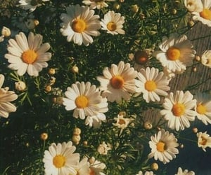 flowers, aesthetic, and wallpaper image