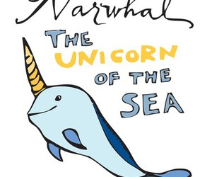 narwhal and unicorn image
