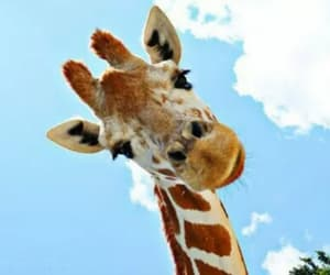 colors, foto, and giraffe image