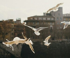 birds, fly, and photography image