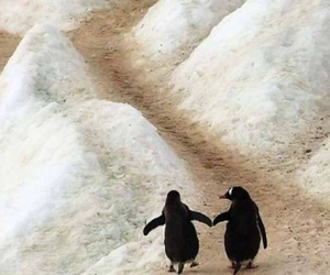 couple, together, and penguin image