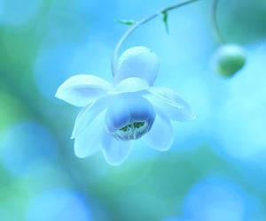 blue, flowers, and turquoise image