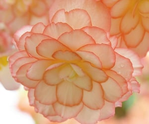 flowers, pastel, and peach image