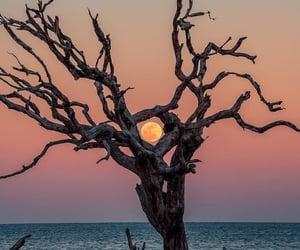 nature, moon, and paisaje image
