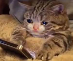 cat, cry, and funny image