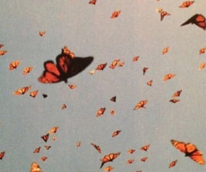 butterflies, animals, and sky image