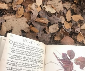 autumn, book, and november image