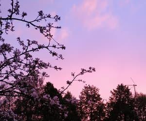 apple tree, beautiful, and evening image