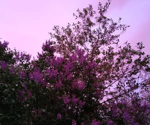 after rain, pink, and evening image