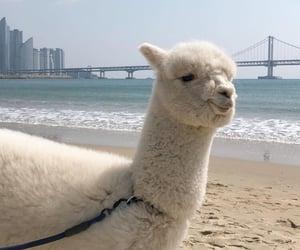 aesthetic, alpaca, and animal image