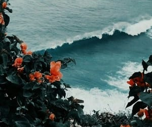 flowers, wallpaper, and ocean image