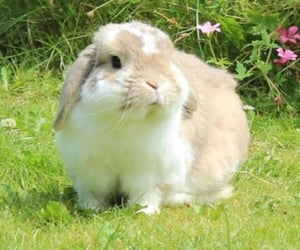 bunny, flowers, and fluffy image