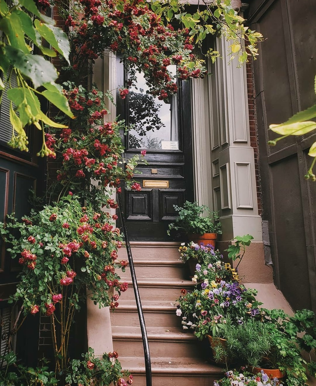 flowers, photography, and places image