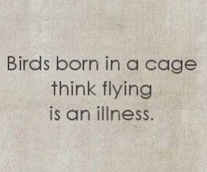 birds, illness, and text image