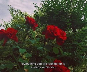 quotes, rose, and flowers image