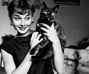 audrey hepburn, cat, and black and white image