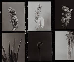b&w, flowers, and photography image