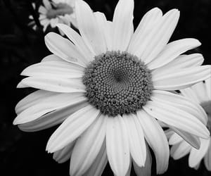 art, photography, and b&w image