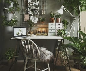 plants and home image