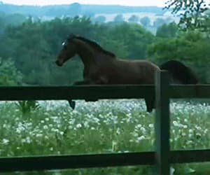 gif and horse image