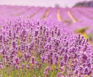 belleza, campo, and primavera image