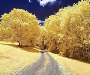 nature, yellow, and sky image