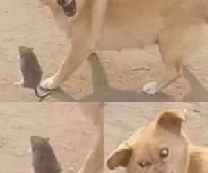 foto, meme, and perro image