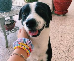 bracelets, cute dogs, and dog image