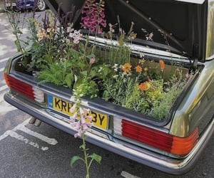 car, flowers, and plants image