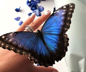 aesthetic, beautiful, and butterflies image