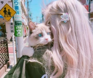 asian, cat, and fashion image