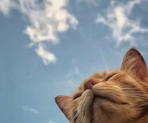animals, cat, and sky image