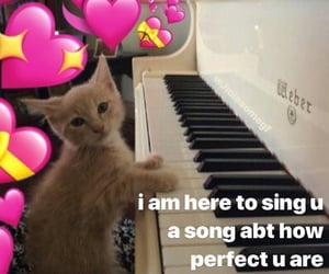 cat, hearts, and meme image