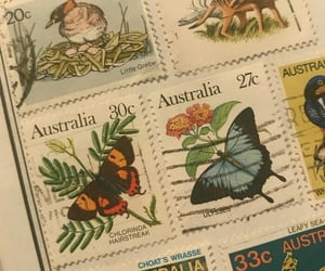 australia, bird, and butterfly image