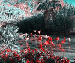theme, aesthetic, and flamingo image