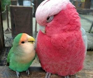 bird, animal, and pink image