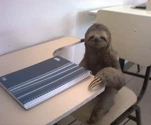school, sloth, and funny image